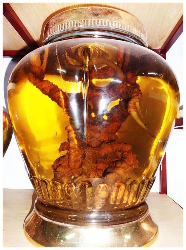 Rượu ngâm sâm Ngọc Linh tươi tăng cường sinh lý, bổ thận, tráng dương.