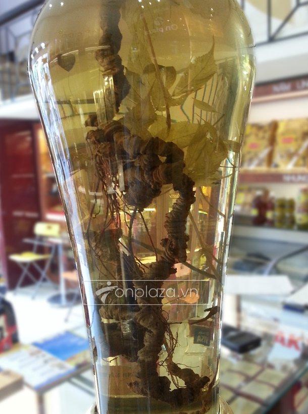 Bình Sâm Ngọc Linh (loại 2,4kg/1 củ) 2