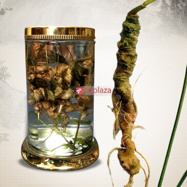 Bình sâm Ngọc Linh 45 năm tuổi loại 1kg 10 – 13 củ  2