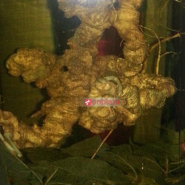 Bình sâm Ngọc Linh 45 năm tuổi loại 1kg 10 – 13 củ  3
