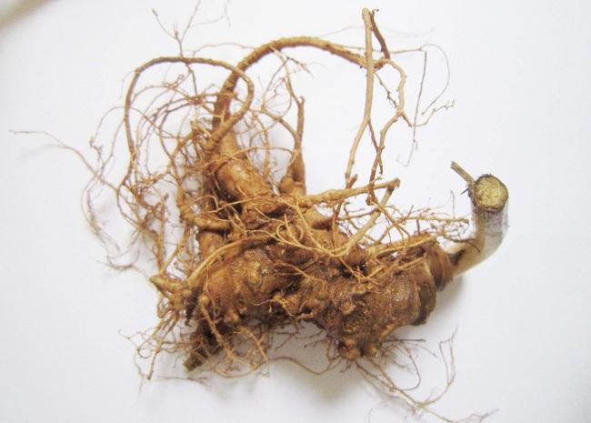 Sâm Ngọc Linh có nhiều tác dụng với các loại bệnh khác nhau