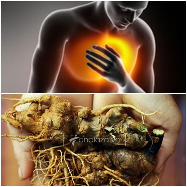 Sâm Ngọc Linh rừng tự nhiên Kon Tum Quảng Nam phòng ngừa bệnh tim mạch, bảo vệ gan