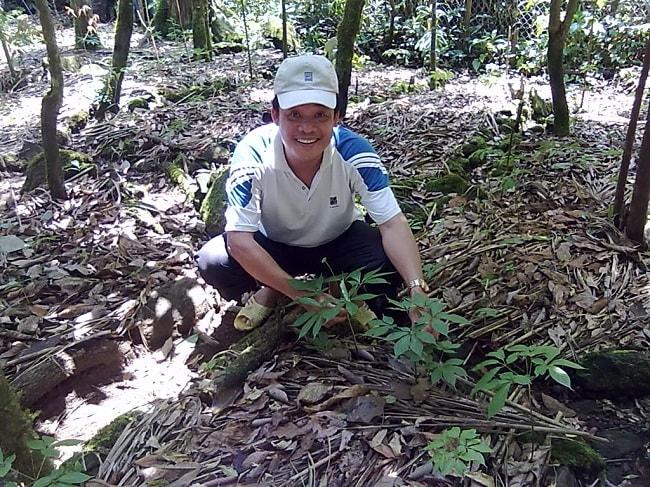Điều kiện khí hậu và thổ nhưỡng cũng cần phải được đảm bảo để sâm Ngọc Linh phát triển