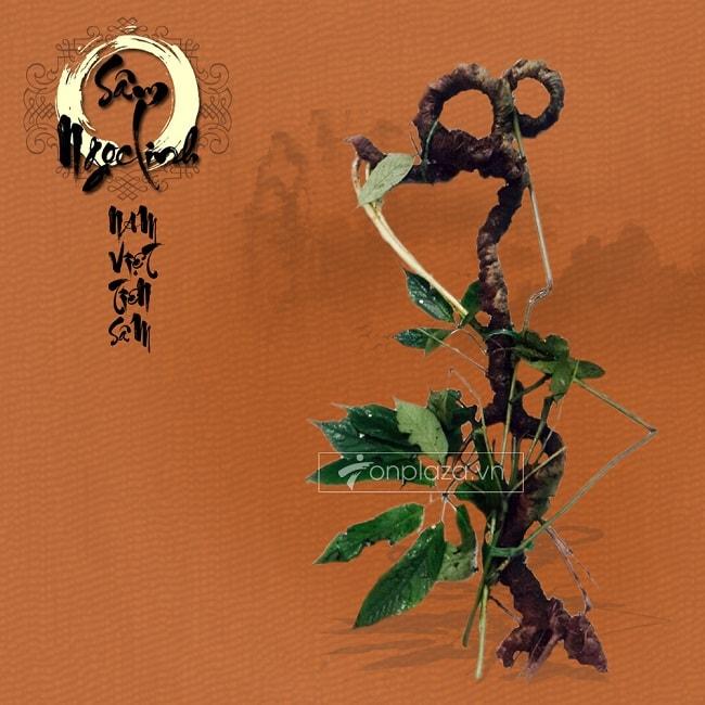 âm Ngọc Linh tự nhiên có giá rất cao trên thị trường