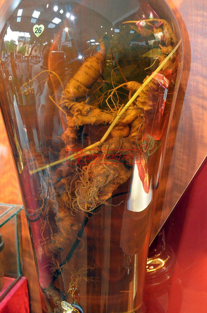 Bình sâm ngọc linh 1.65kg loại 70 tuổi 3