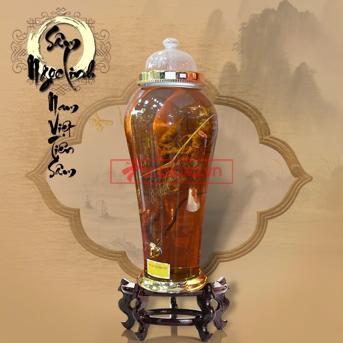 Bình sâm ngọc linh 1.65kg loại 70 tuổi
