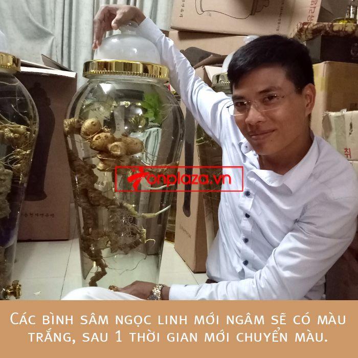 Bình sâm ngọc linh củ 2kg chất lượng cao 2