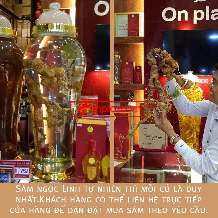 Bình sâm ngọc linh củ 2kg chất lượng cao 3