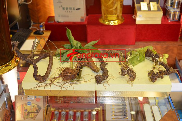 Các mẫu sâm và bình ngâm sâm ngọc linh hiện có tại cửa hàng 8