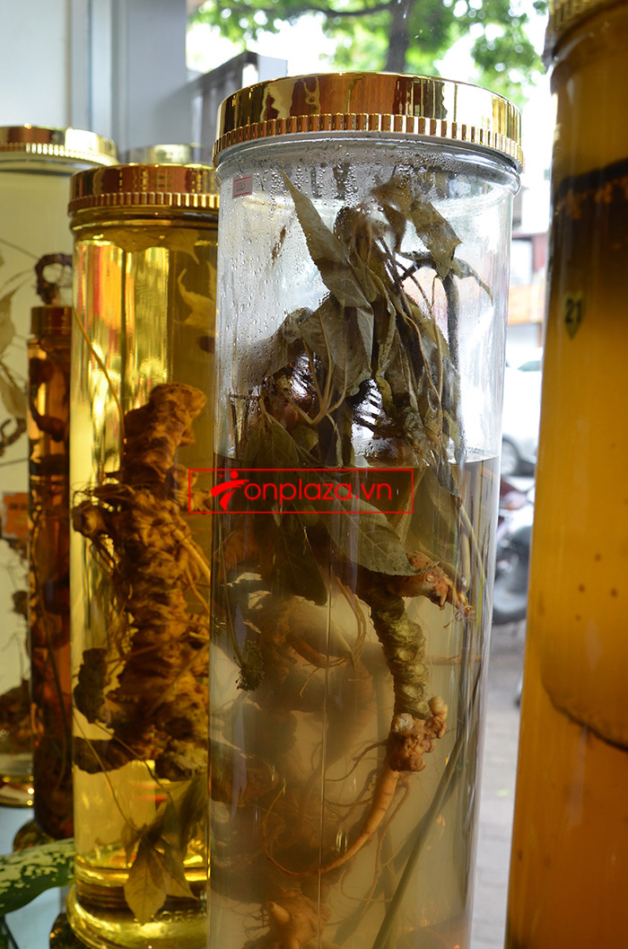 Những mẫu sâm ngọc linh khác hiện có tại cửa hàng 6