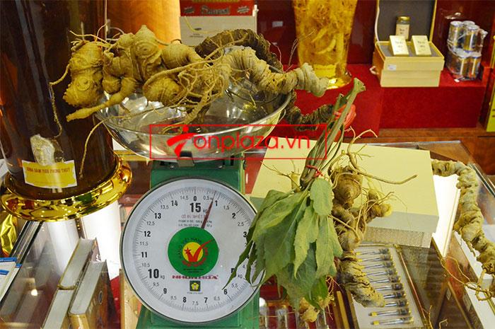 Sâm ngọc linh nguyên củ trọng lượng 6.5 lạng 1