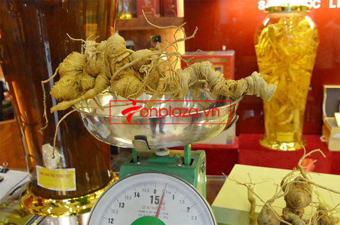Sâm ngọc linh nguyên củ trọng lượng 6.5 lạng 2