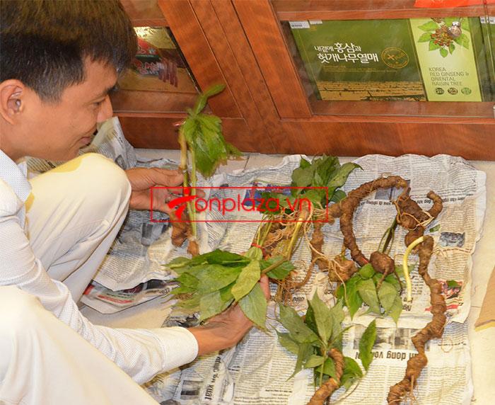 Sâm Ngọc Linh tự nhiên nguyên củ loại 10 - 20 củ/1kg 1