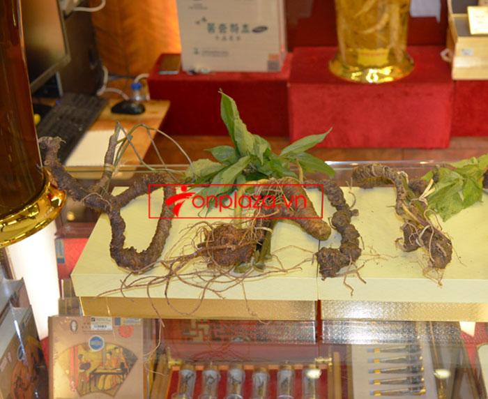 Sâm Ngọc Linh tự nhiên nguyên củ loại 10 - 20 củ/1kg 11