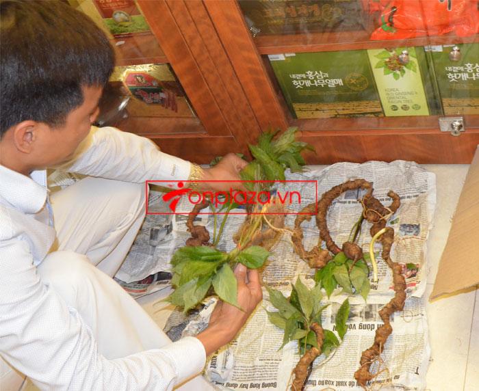 Sâm Ngọc Linh tự nhiên nguyên củ loại 10 - 20 củ/1kg 3