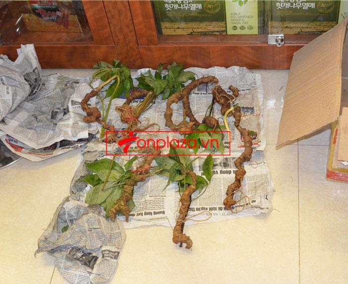 Sâm Ngọc Linh tự nhiên nguyên củ loại 10 - 20 củ/1kg 4