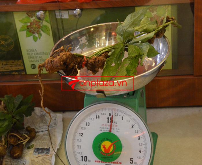 Sâm Ngọc Linh tự nhiên nguyên củ loại 10 - 20 củ/1kg 7