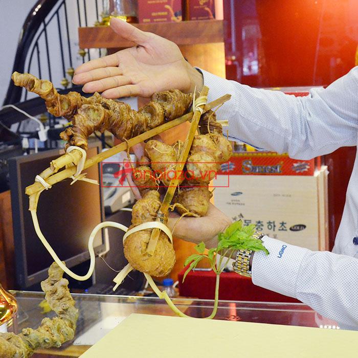 Sâm ngọc linh tươi tự nhiên củ 1.13kg 2
