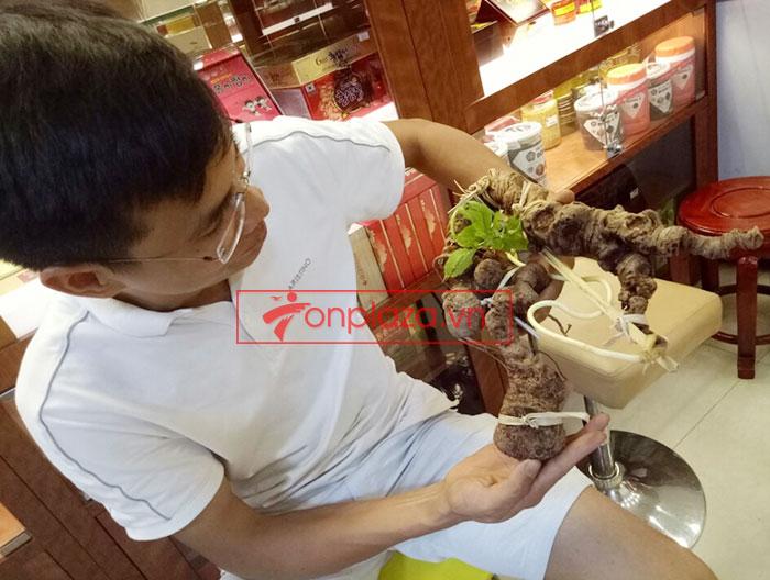 Sâm ngọc linh tươi tự nhiên củ 1.13kg 9