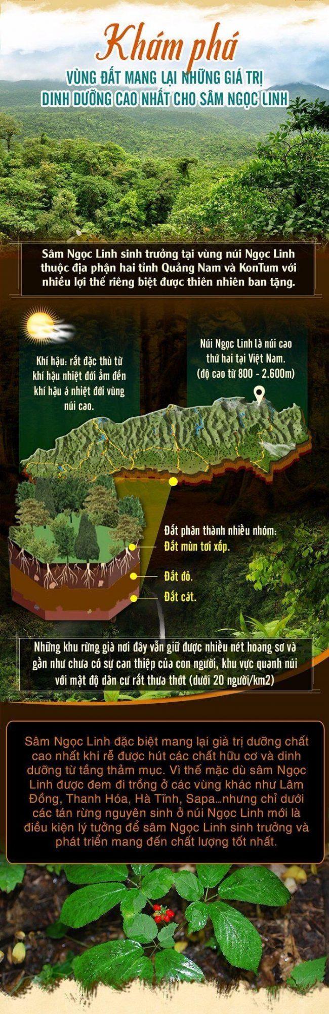 Núi Ngọc Linh mới là nơi sinh trưởng tốt nhất của sâm Ngọc Linh