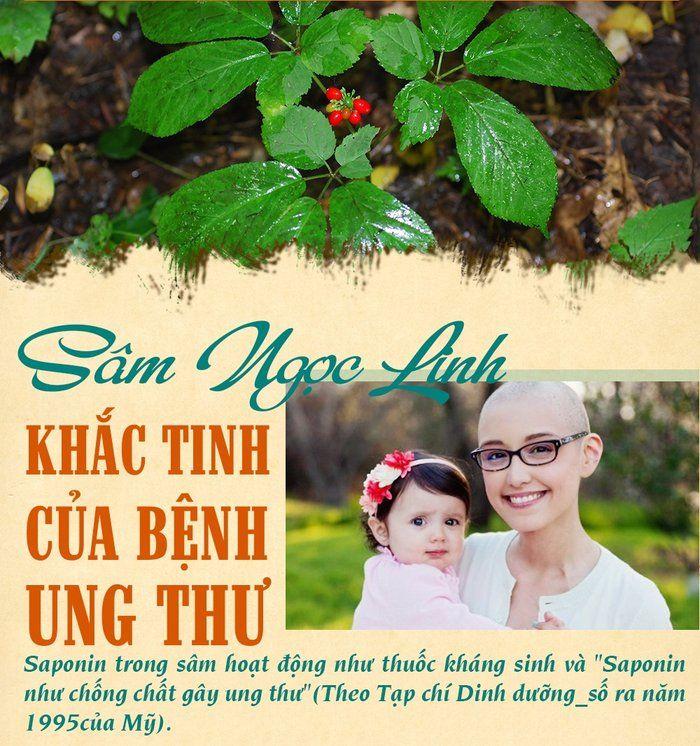 Thần dược sâm Ngọc Linh hỗ trợ trong điều trị ung thư