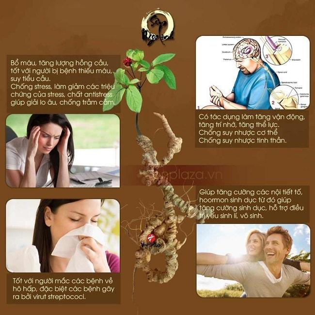 Bài thuốc sâm Ngọc Linh chữa bệnh tốt nhất