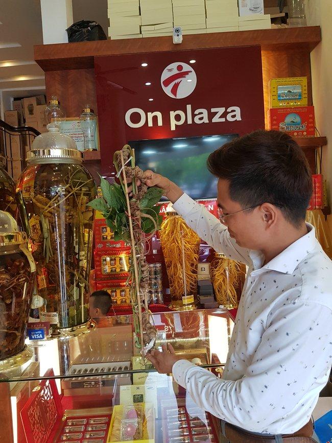 Công ty On Plaza Việt Pháp cung cấp đầu ra cho giống sâm Ngọc Linh trồng