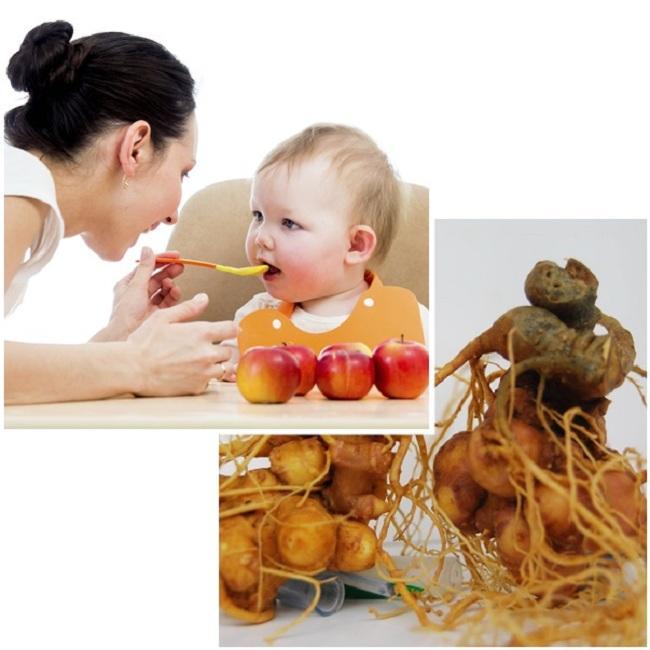 Sâm ngọc Linh giúp cho trẻ còi xương hấp thu dưỡng chất tốt