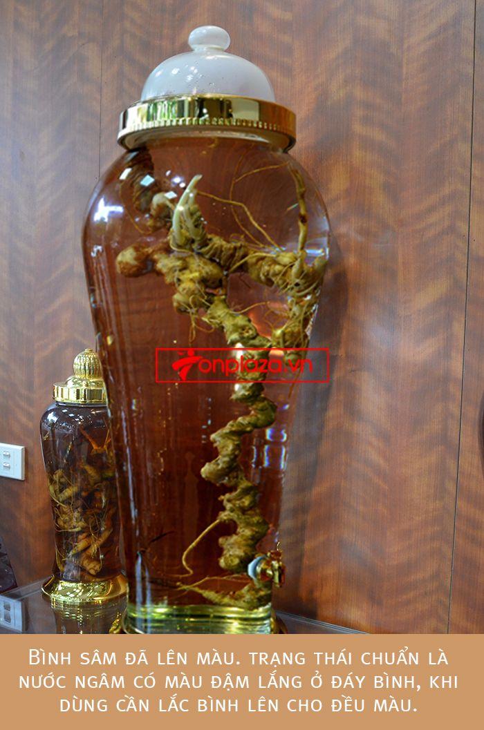 Bình ngâm củ sâm ngọc linh 1.9kg cao cấp 7