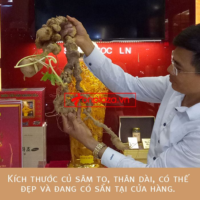 Bình sâm ngọc linh củ 2kg chất lượng cao 1