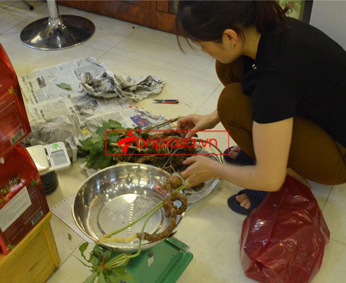 Sâm Ngọc Linh tự nhiên nguyên củ loại 10 - 20 củ/1kg 9