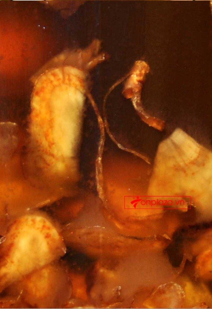 Sâm Ngọc Linh và Đông trùng hạ thảo ngâm mật ong bình NO.13- 6L NS671 3