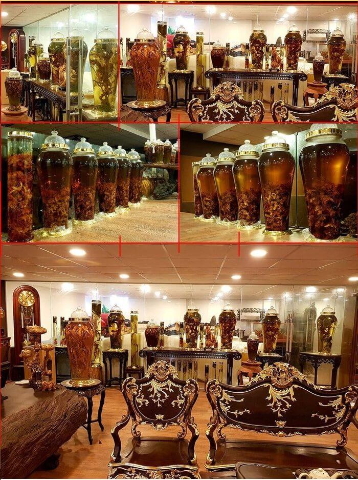 Chiêm ngưỡng phòng trưng bày sâm Ngọc Linh của anh Đào Văn Quang
