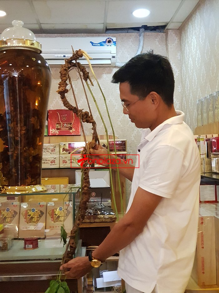 Bình sâm Ngọc Linh rừng cao cấp số 13 - 6 lít 5