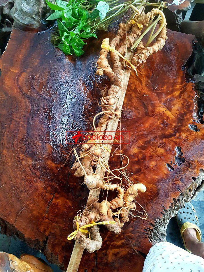 Bình sâm Ngọc Linh rừng 100% thượng hạng - 41 lít 10