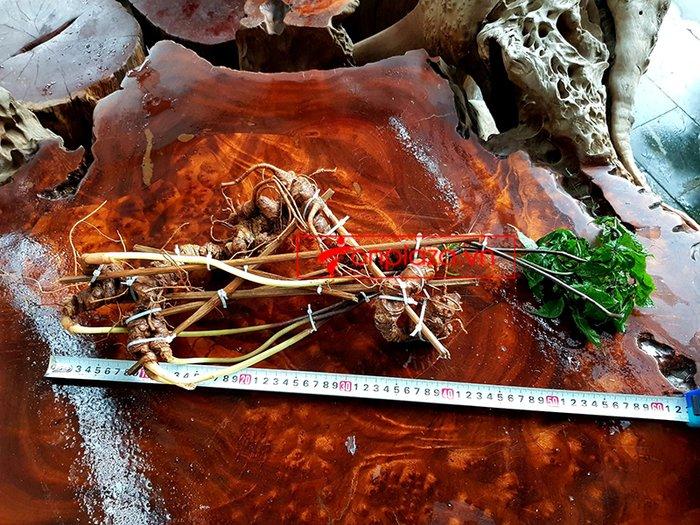 Bình sâm Ngọc Linh rừng 100% thượng hạng - 41 lít 12