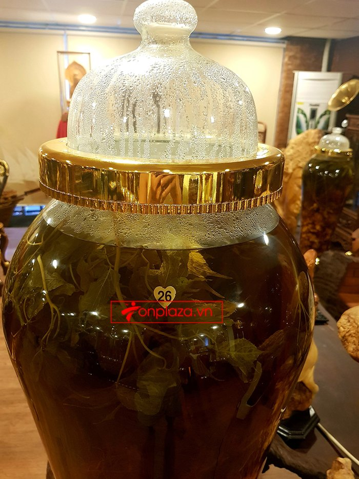 Bình sâm Ngọc Linh trồng tại đỉnh núi Kon Tum số 26 - 41 lít 5