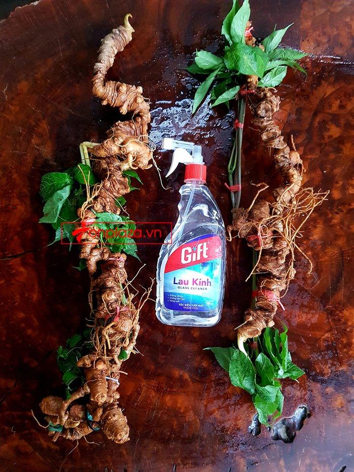 Bình sâm Ngọc Linh trồng tại đỉnh núi Kon Tum số 26 - 41 lít 11