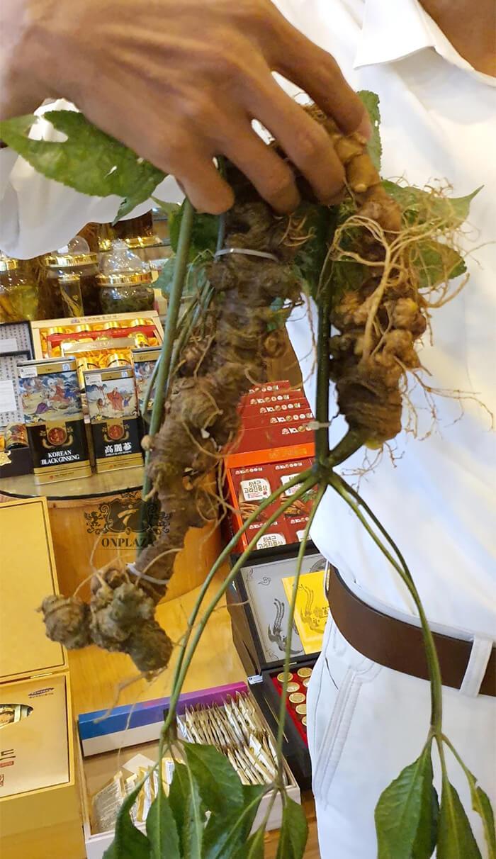 Sâm Ngọc Linh trồng 15 - 20 năm tuổi, 5 củ 1kg 5