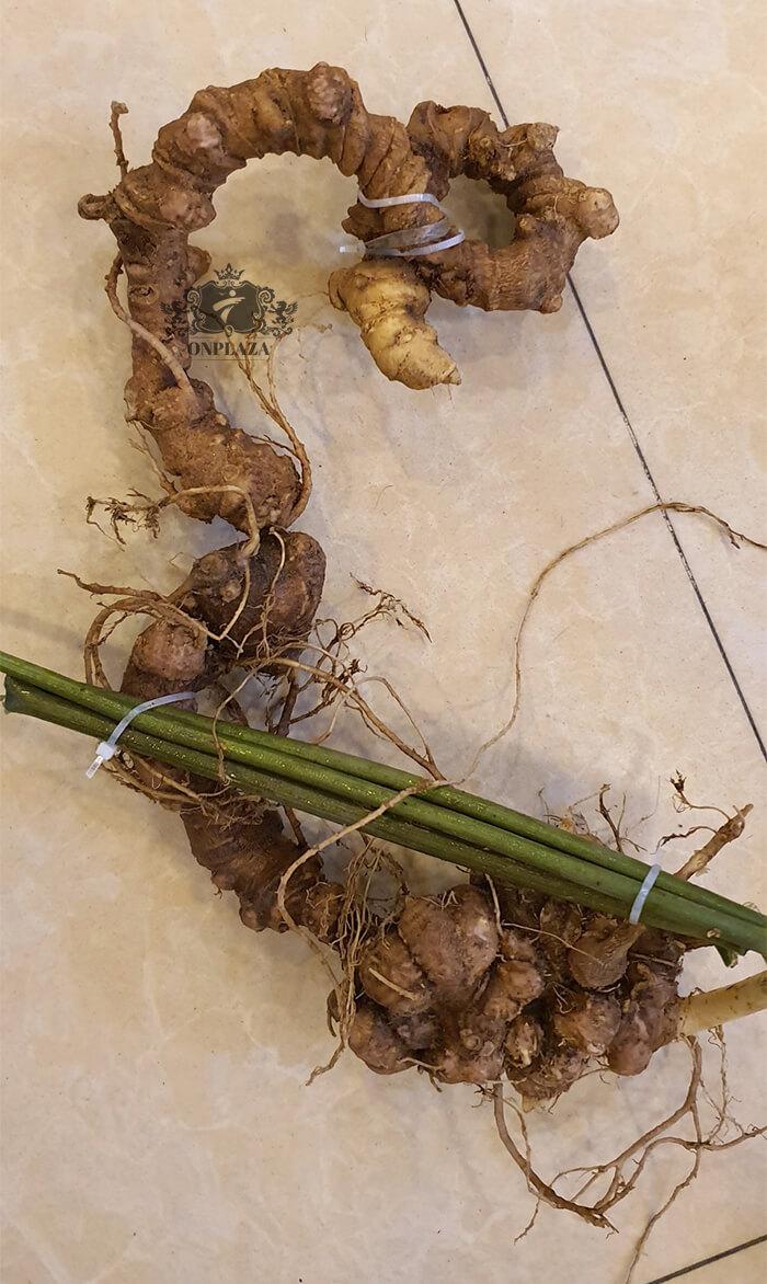 Sâm Ngọc Linh trồng 15 - 20 năm tuổi, 5 củ 1kg 11